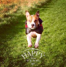 happyny