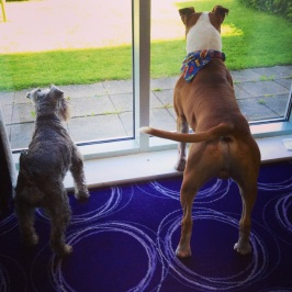 look outs