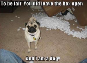 well i am a dog