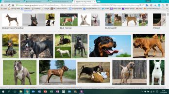 agg dog breeds