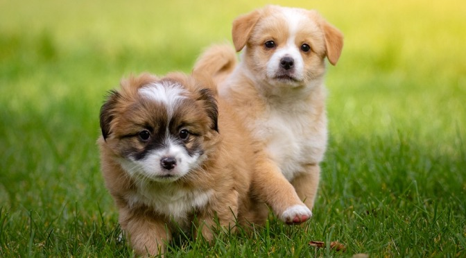 Got Puppy. Now what?