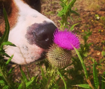 Day 6: Sniffing Saturday