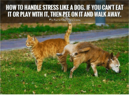 how-to-handle-stress-like-a-dog-if-you-cant-31459395