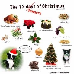 christmas-dangers