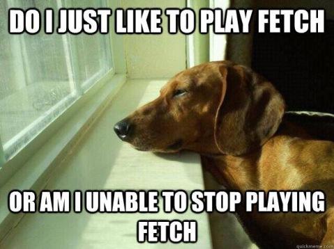 do i like to play fetch