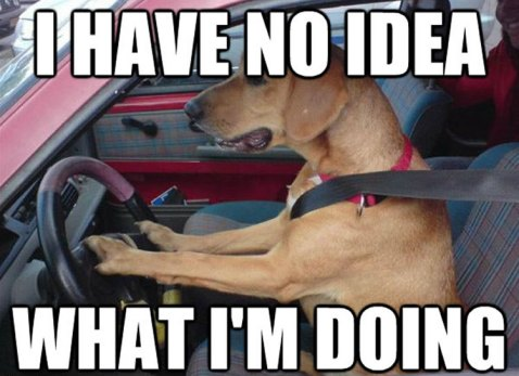 dog-driving-car-memes