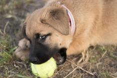 puppy ball 2