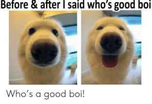 good boi