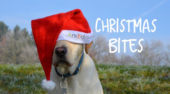 Christmas Bites: What's Santa Paws bringing?